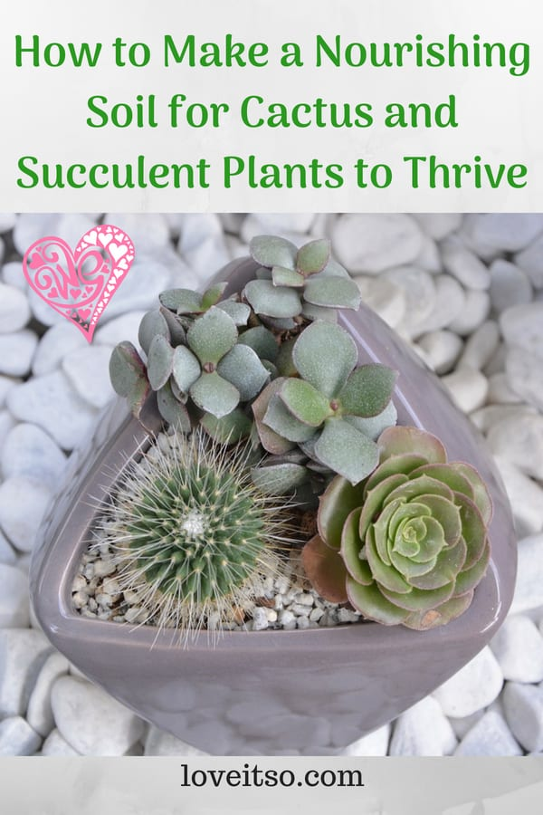 How to Make a Nourishing Soil for Cactus and Succulent Plants to Thrive