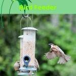 Best Hanging Squirrel Proof Wild Bird Feeder
