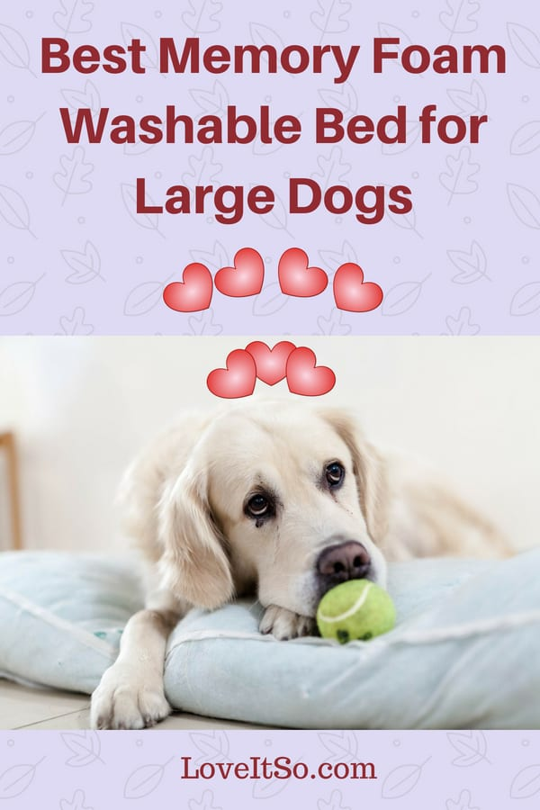 Best Memory Foam Washable Bed for Large Dogs